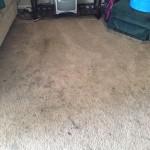 Dublin-Dirty-Carpet